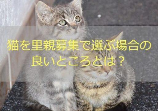 猫 里親 良いところ