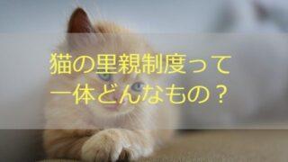 猫 里親制度とは