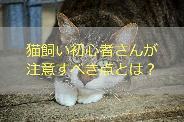猫 初心者 注意点