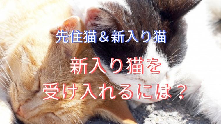 先住猫 新入り猫
