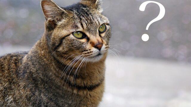 猫 腎不全 兆候