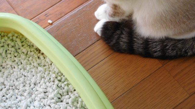 猫 ストレス 行動