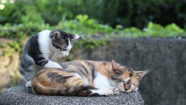 猫 エイズ 白血病 多頭飼い