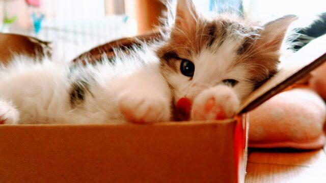猫 白血病