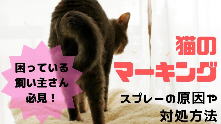 猫 マーキング