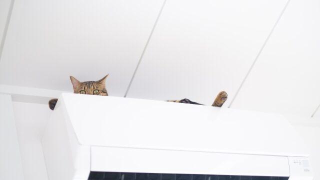 猫 暑さ対策