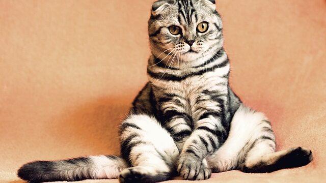 猫 座り方