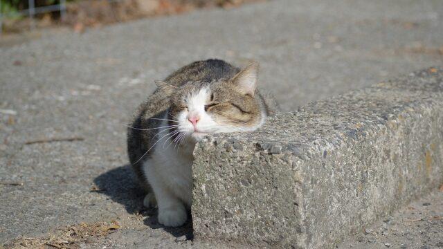 猫 すりすり