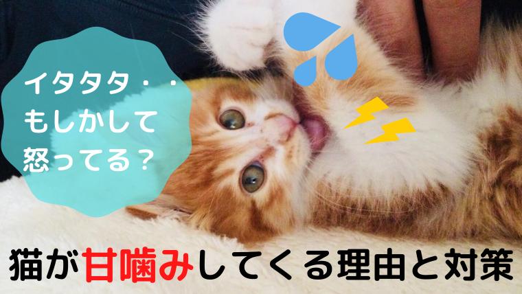 猫 甘噛み