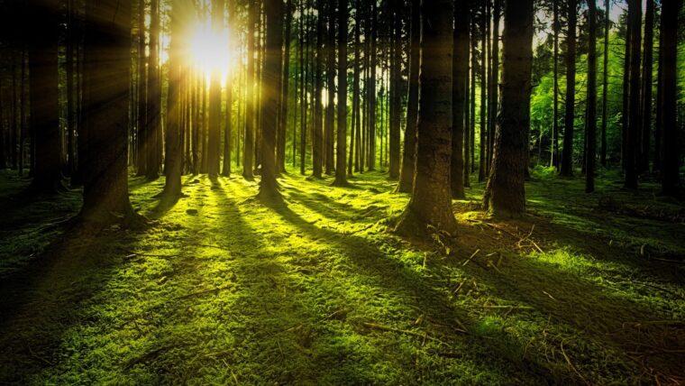 天然木材の香り